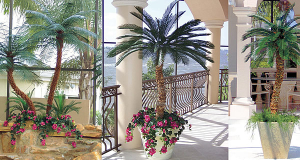 Attractive Patio Palm Trees