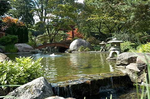 Backyard Japanese Water Garden 2016