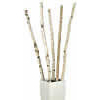 6 to 8 Tall Natural Birch Poles (1 to 2 Diameter)