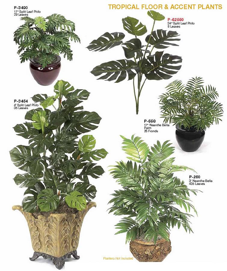 Indoor Accent Floor Plants